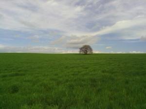 La plana d'Urgell