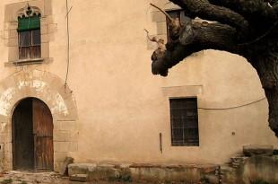 Pedrís (en una masia)